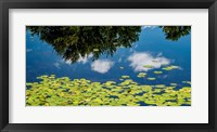 Framed Water Lilies and Reflection