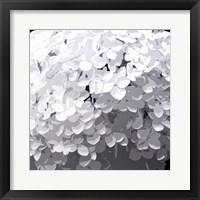 Framed Annabelle Hydrangeas