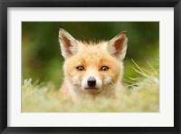 Framed Bad Fur Day