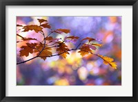 Framed United Colors of Autumn