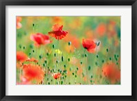 Framed United Colors of Summer