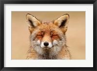 Framed Zen Fox Red Portrait