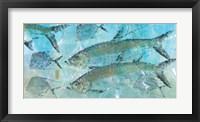 Framed Tarpon Lagoon