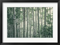 Framed Obscured by Alders