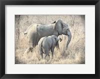 Framed Elephants