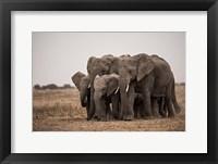 Framed Elephant Family