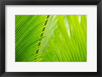 Framed Fern Tips