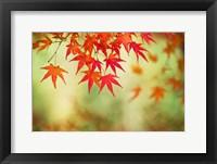 Framed Shoji: Momiji I