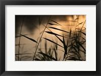 Framed Twilight Grasses