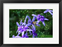 Framed Bee and Purple Flowers