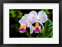 Framed White, Yellow and Fuchsia Orchids