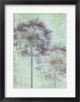 Framed Allium Globe Master