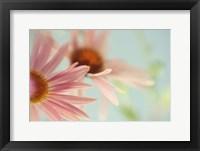 Framed Daisy Days