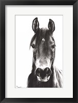 Framed Horse Portrait