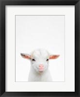 Framed Baby Goat