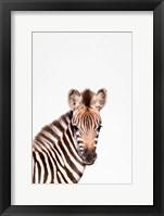 Framed Baby Zebra