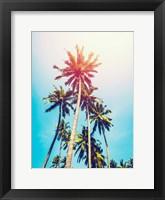 Framed Palms in the Sun