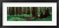 Framed Redwoods Path