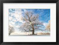Framed Cold Oak