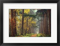 Framed Colors of the Forest