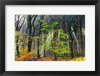 Framed Colors of the Forest IV