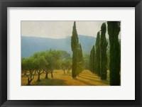 Framed Cypress Shadows