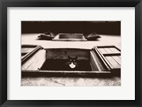 Framed Dali the Cat