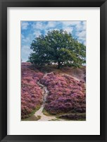 Framed Purple Heath