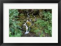 Framed Fern Waterfall
