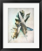 Framed Feather Study No. 5