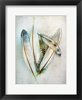 Framed Hen Feathers
