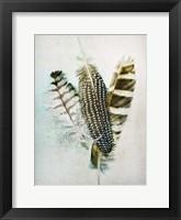 Framed Owl - Guinea Feathers