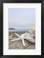 Framed Crescent Beach Shells 14