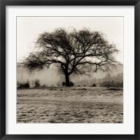 Framed Willow Tree
