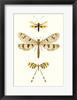 Framed Entomology Series I