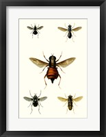 Framed Entomology Series III