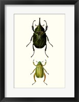 Framed Entomology Series IV