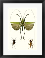 Framed Entomology Series V