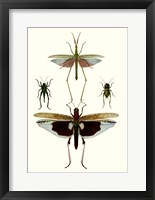 Framed Entomology Series VI
