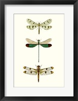 Framed Entomology Series VII
