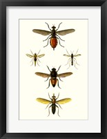 Framed Entomology Series IX