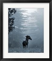 Framed Horse in the Trees I
