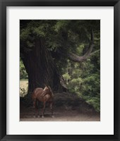 Framed Horse in the Trees II