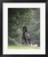 Framed Horse in the Trees III