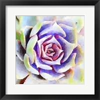 Framed Succulente II