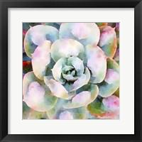 Framed Succulente V