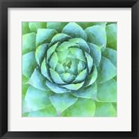 Framed Succulente X