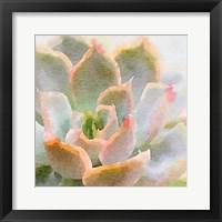 Framed Succulente XI