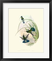 Framed Hummingbird Delight VI