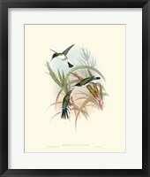 Framed Hummingbird Delight VII